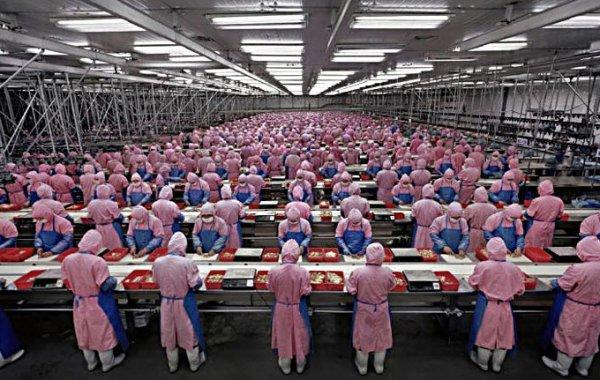 Foxconn объявляет мобилизацию. Для сборки iPhone 6 нужно более 100 000 новых рабочих